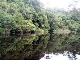 amazon com nine s myrtle clipart pinart water meeting in water meeting