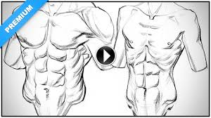 how to draw obliques u2013 anatomy and motion proko
