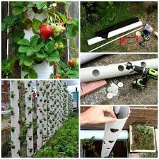 Vertical Flower Bed - wonderful diy vertical pvc planter pvc pipe strawberry tower