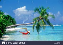 in chair swing hanging from palm tree on tropical island