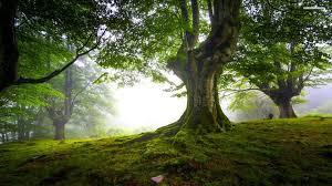 free trees wallpapers reuun com