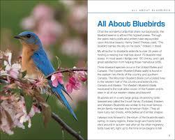 bluebirds adventurepublications net