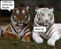 Tiger Meme - i can has cheezburger tiger funny animals online cheezburger