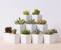 cute pots for plants great idea for small plants cute white ceramic vases hexagon flower