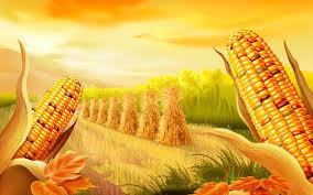 thanksgiving widescreen wallpaper corn harvest widescreen wallpaper wide wallpapers net