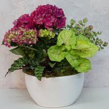 At Home Design Center Greenwich Ct Plants Indoor U0026 Outdoor Plants Mcardle U0027s Garden Center