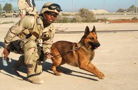 belgian shepherd navy seals seal team six alum on mission to find bergdahl wants justice for