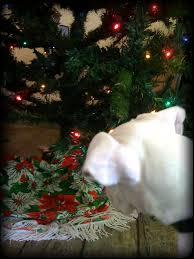 consider christmas from a pet u0027s p o v virtuavet