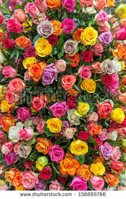colorful roses colorful roses background stock photo 156895766