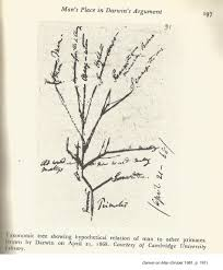 darwin s tree of diagram 1 gruber 1981 p 197 1868 storyality