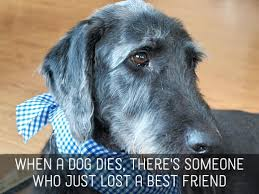 dog condolences pet sympathy messages condolences for loss of dogs cats and other
