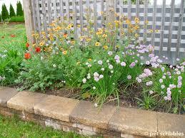 geum perennial flowers for your garden pet scribbles