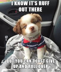 Encouraging Meme - encouraging puppy is encouraging meme on imgur