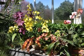 orchid show orchidelirium 2016 the new york botanical garden