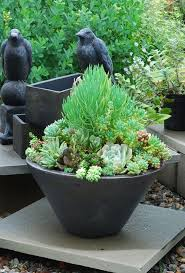 106 best n az landscaping u0026 wildlife images on pinterest plants