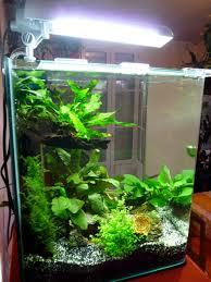 idee deco aquarium photo déco aquarium nano