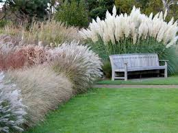 ornamental grass hedge a hedge doesn t to be planted of
