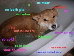 Unhappy Meme - doge meme no moar no no bath pls so unhappy such sadness picsmine