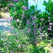 Best Plants For Rock Gardens Rock Garden Plants Uk Morriscar Club