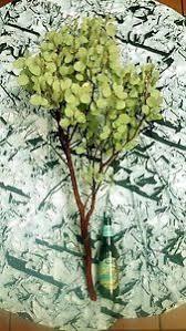 Manzanita Centerpieces Manzanita Branches Centerpieces U0026 Table Decor Ebay