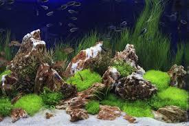 Live Rock Aquascaping Aquarium Decoration And Aquascaping