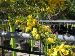 Garden Supplies Garden Supplies Coral Springs Sunkiss Nursery Largest