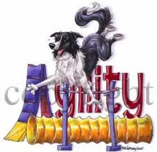 afghan hound agility agility jump