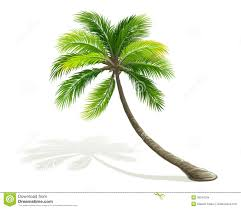 palm tree stock images image 30242034