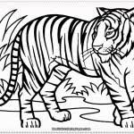 impressive tiger color pages image unbelievable coloring
