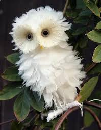 The Barn Owl Carol Stream 1705 Best Owls U0026 Wolves Spirit Animals Images On Pinterest