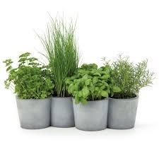 plante aromatique cuisine 5 plantes aromatiques dans la cuisine tunisienne des épices