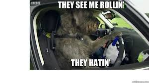Dog Driving Meme - dog driver meme they see me rollin they hatin driving dog