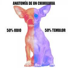 Memes De Chihuahua - meme perro chihuahua buscar con google imagenes graciosas xd