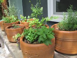Outdoor Planters Large by Elegant Large Outdoor Planters Home Designing Planting Ideas
