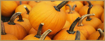 pumpkins learn grow pumpkins basic information