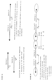 patent ep2218730a1 chlamydia trachomatis genomic sequence and