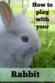 112 best backyard rabbits images on pinterest raising rabbits