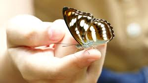 has a butterfly in stock footage 6204821