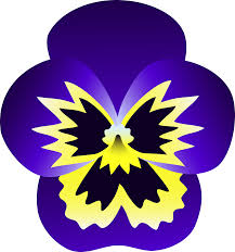 purple and yellow pansy flower free clip art