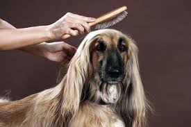does an afghan hound shed why dogs shed and how to reduce shedding in dogs