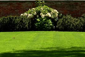 how to get rid of grass to reduce lawn size