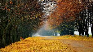 miscellaneous fall leaves colorful autumn nature free desktop