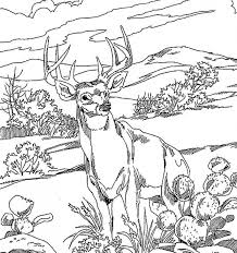 deer coloring pages animal whitetail mule mintreet