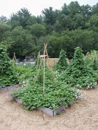 How To Make Trellis For Peas Which Trellis Is The Best Trellis U2014 Seed Savers Exchange Blog