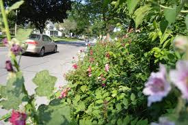 native iowa plants iowa city engages homeowner in a u201cright to garden u201d dispute over