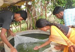 enhancing rural livelihood through ornamental fish culture