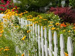 Picket Fences Yellow And Red Flowers Growing Along A White Picket Fence In