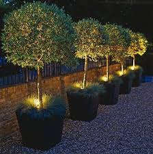 how to put lights on a tree outdoors 38 innovative outdoor lighting ideas for your garden