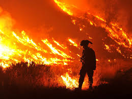 Wildfire Cali by Images Of This Year U0027s Devastating Wildfire Season Business Insider