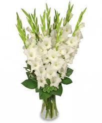 gladiolus flower tranquil light white gladiolus vase in platte ne the